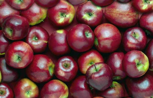 datos-curiosos-sobre-las-manzanas