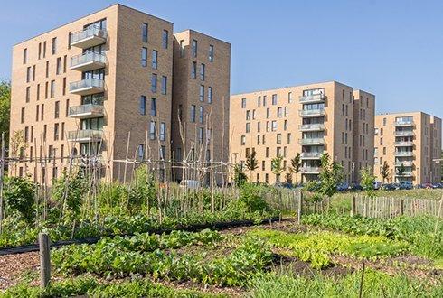 agricultura urbana en las ciudades