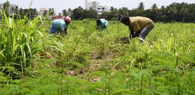 beneficios de la agricultura organica