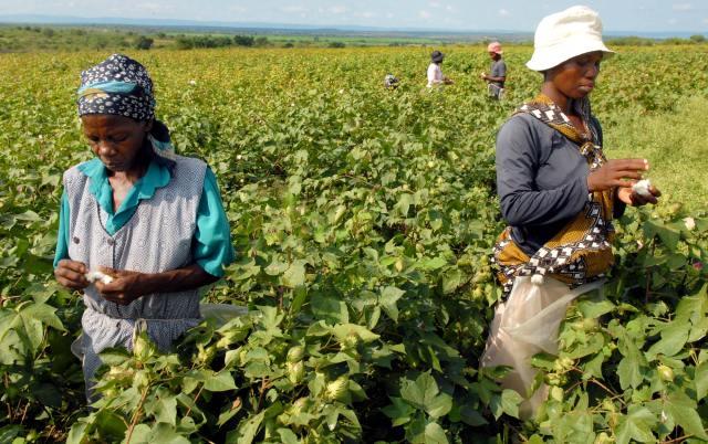 ¿Porque no es tan buena la agricultura de subsistencia?