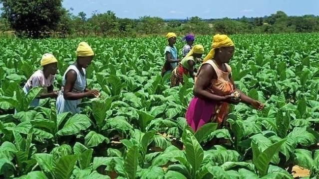 la importancia de la agricultura