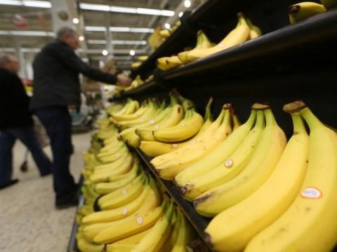 datos estadisticos sobre el cultivo de banano