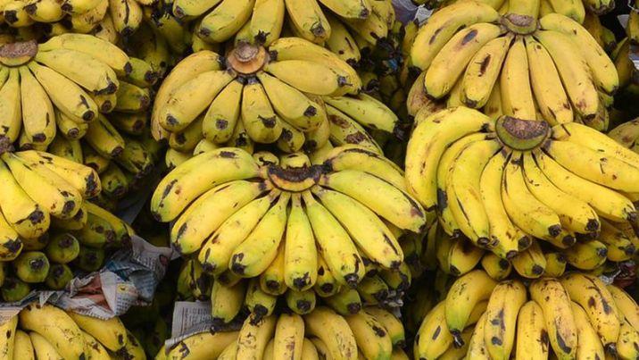 datos historicos sobre el cultivo de banano