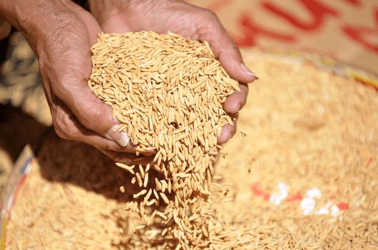 Principales países productores de arroz