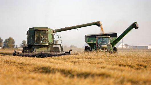 productores de arroz a gran escala