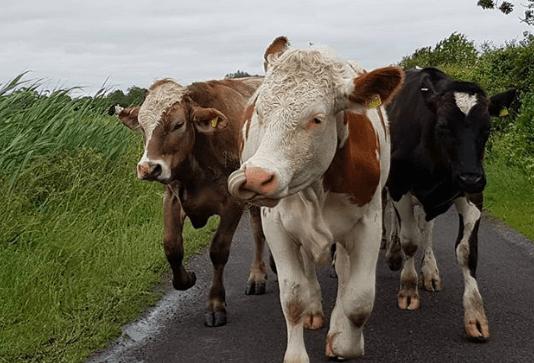 Enfermedades animales comunes y su manejo