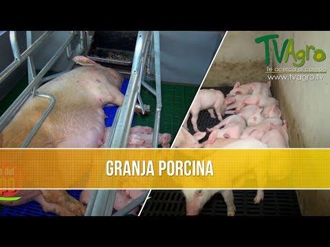 Como Comenzar una Granja Porcina