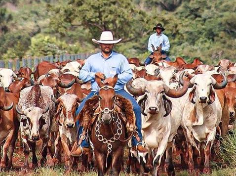 ¿Cuándo destetar el ganado bovino?
