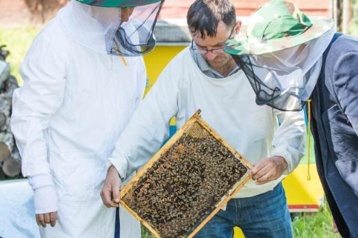 alquiler de abejas