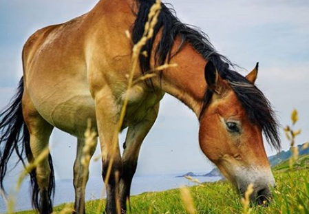caballo se tropieza con patas delanteras
