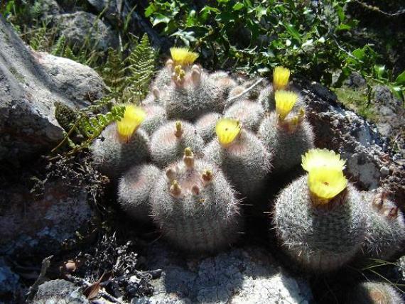 Flora nativa en la Sierra de las Ánimas