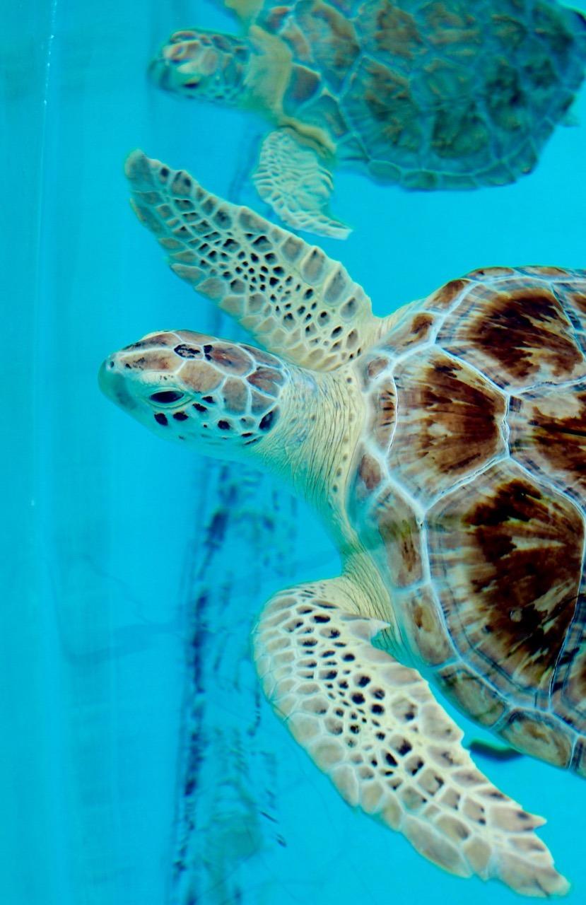 Turtle Hospital in The Florida Keys