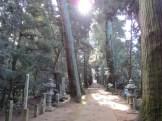 日吉神社杉並木