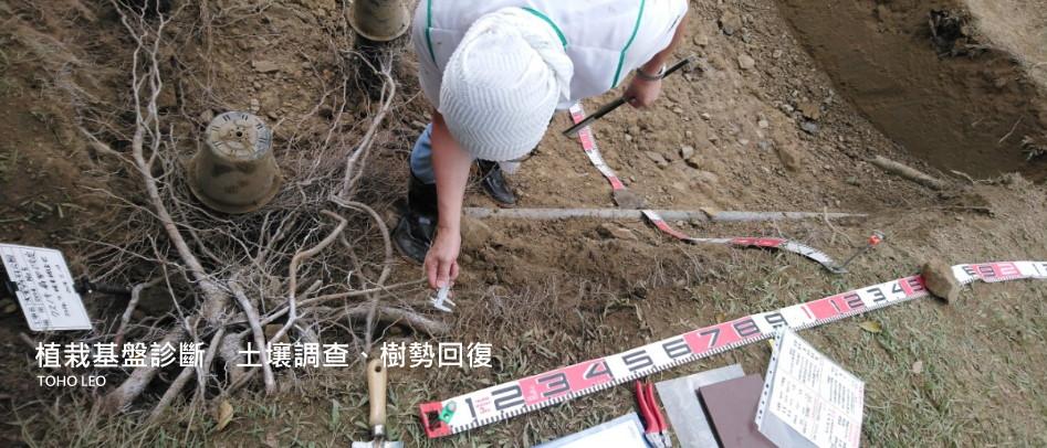 植栽基盤診斷 土壤調查 ‧ 樹勢回復 - 日商東邦利昂股份有限公司