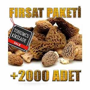 2000-adet-kuzu-gobegi-tohumu