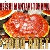 reishi-mantarı-tohumu-miseli-12345