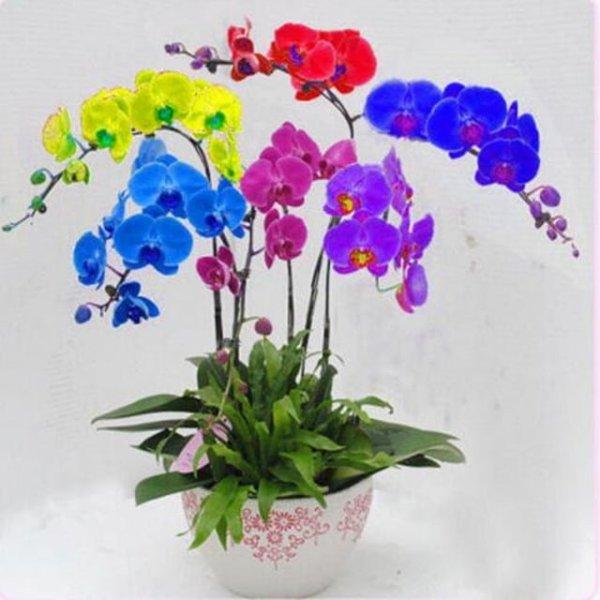 200-Adet-G-kku-a-Phalaenopsis-Tohumlar-Nadir-Mini-Jardin-Bah-e-Dekorasyon-I-in-Cymbidium.jpg_640x640