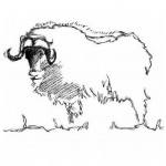 Musk+Ox+cover