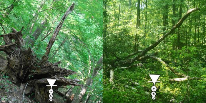 nature photo albums