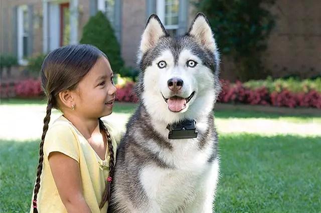 Avec un collier anti fugue, votre animal est protégé