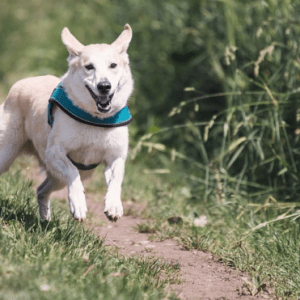 Comment toiletter un chien qui fait du canicross ?
