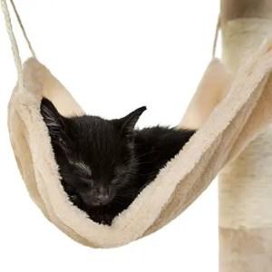 Faites vos propres arbres, tours et autres structures pour chat