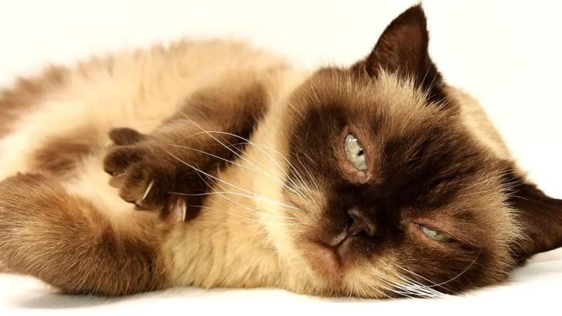 Pourquoi acheter un griffoir pour son chat?
