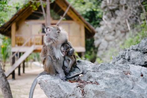 Opice na otoku Sangat, Coron/Palawan, Filipini