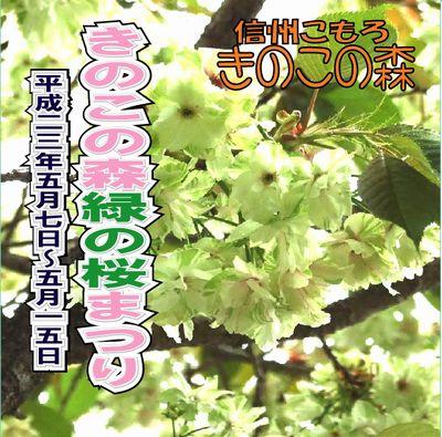 緑桜ちらし桜祭2011_blog.jpg