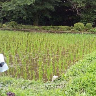 柴崎体育館近くにあるガニガラ田んぼ。3年生が田植えをさせていただきました。