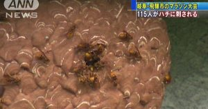 A stirred hornet's nest resulted in 115 marathon participants being stung in Gifu Prefecture
