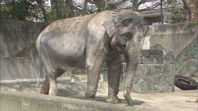 Hanako at Inokashira Park Zoo