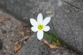「復興」は、爆心地に咲く一輪の花から始まるのです…