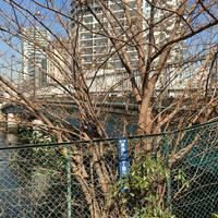 天王洲橋全景