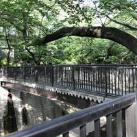 加賀緑橋全景