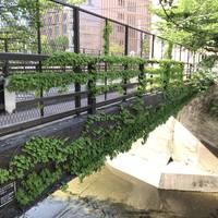 加賀二の橋全景