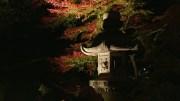 20141128 Tokyo Rikugien Park By Night