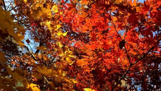 20141209 Autumn Leaves Tokyo Tower Park