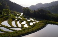 Hiratsuka terraced rice field