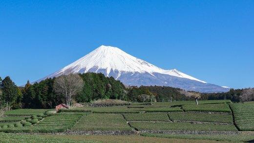 Mt Fuji Tea Obuchi Sasaba