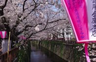 Walking around Nakameguro and its Sakura