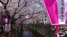 Walking around Nakameguro and its Sakura