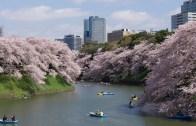 Tokyo Sakura Imperial Palace