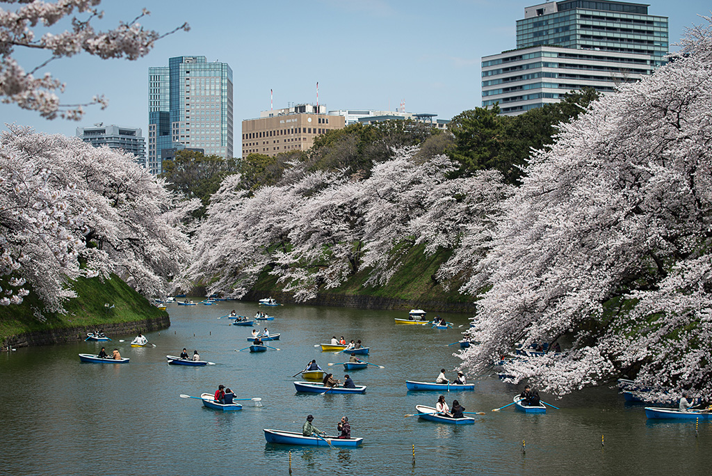 Chidorigafuchi Moat (The Sakura Guide)