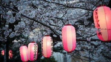 Edogawa Koen (The Sakura Guide)