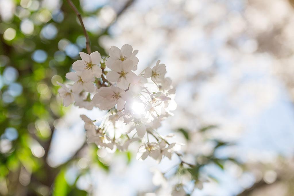 Roppongi Hills (The Sakura Guide)