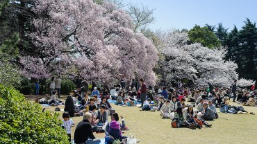 Shinjuku Gyoen National Garden (The Sakura Guide)