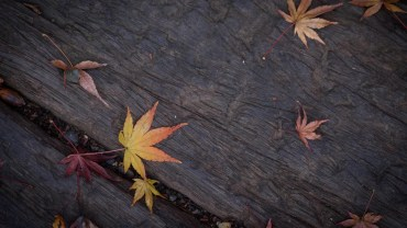 Autumn textures… on the ground