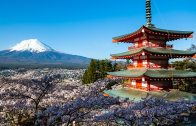 The Cherry Blossoms of Chureito Pagoda
