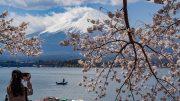 [Cinematic] Kawaguchiko Cherry Blossoms